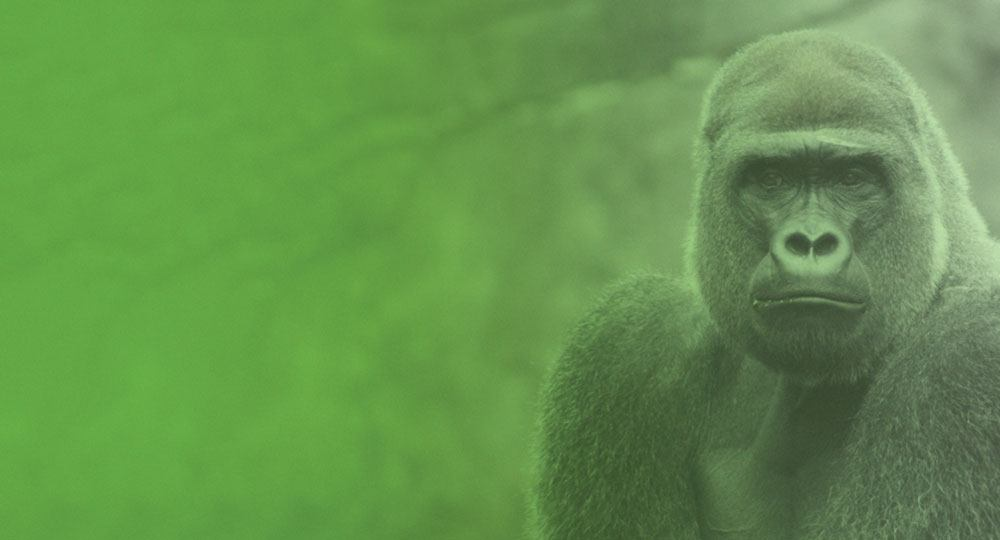 Gorilla image with a green overlay